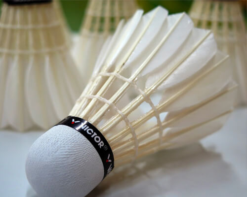 Sport et Badminton